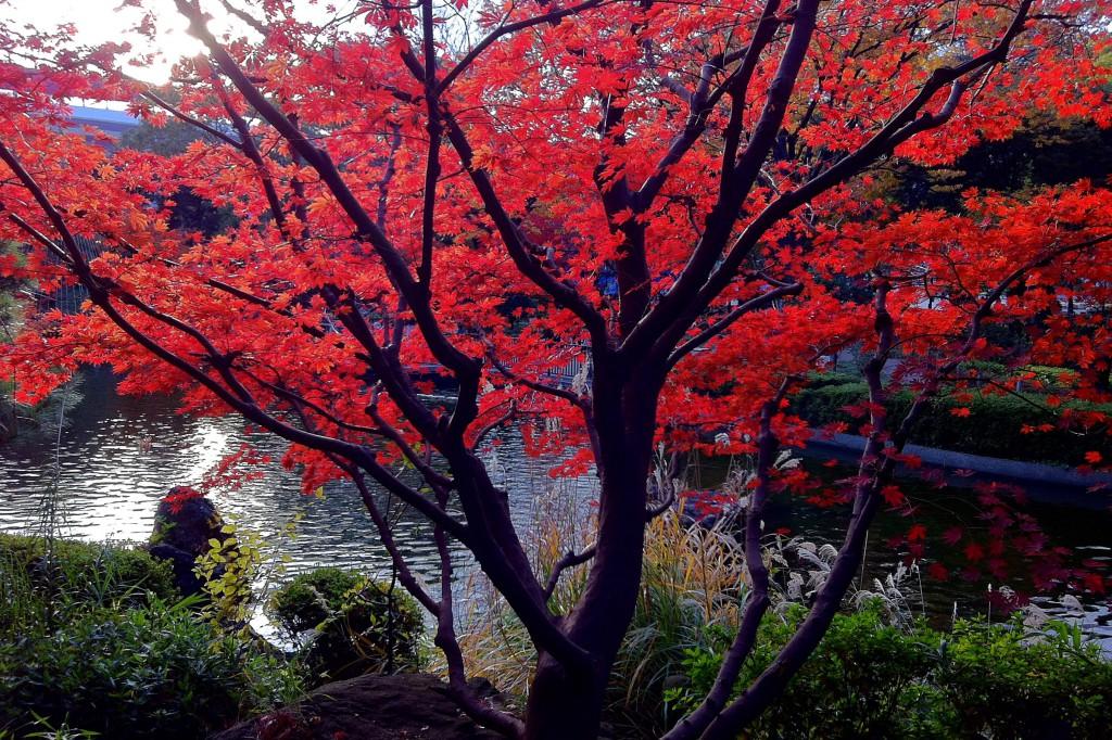 横浜公園紅葉